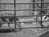 beckett-the-circus-018