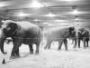 beckett-the-circus-037