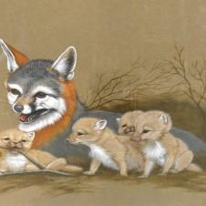 Unusual Fox Painting, Texas artist, Texas painting